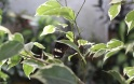 The larvae (caterpillars) of butterflies eat only leaves of plants...